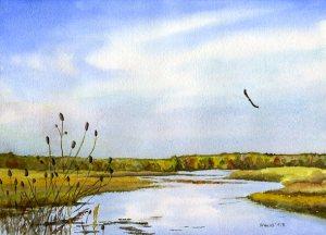Hawk over Weaver Lake, 2008