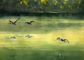 Canada Geese over Swan Lake
